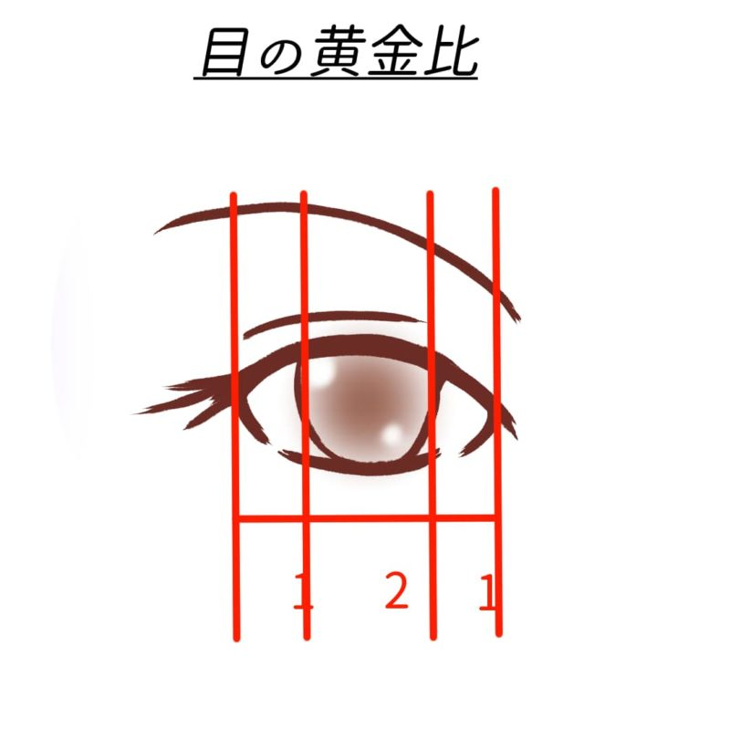 目の黄金比