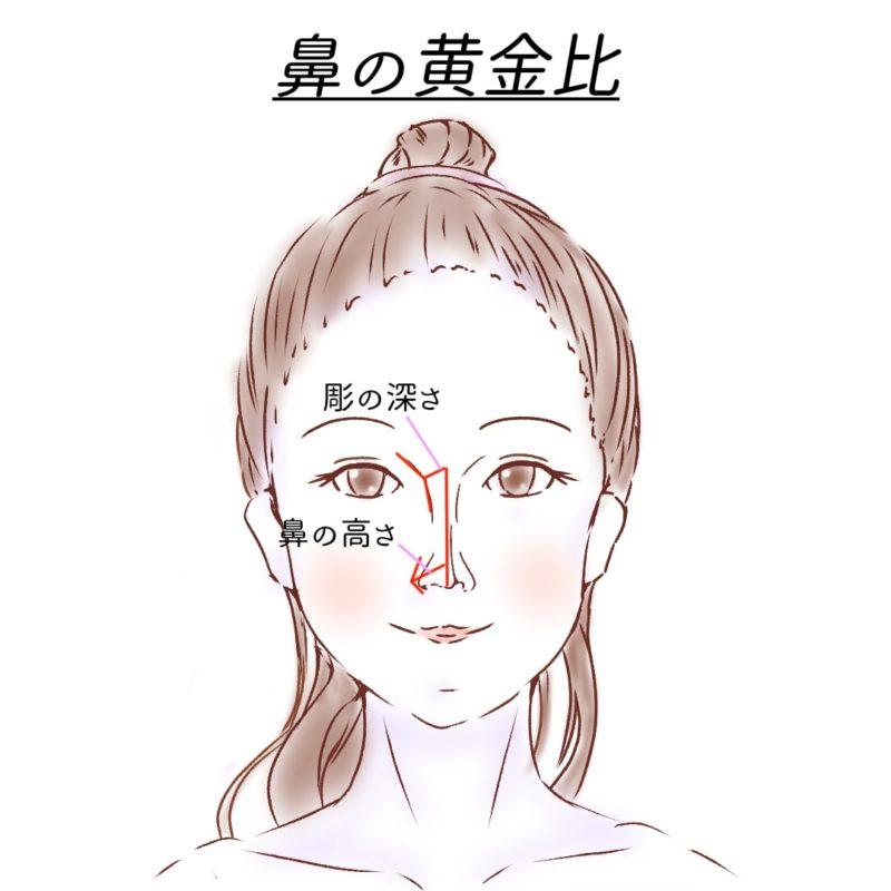 鼻の黄金比