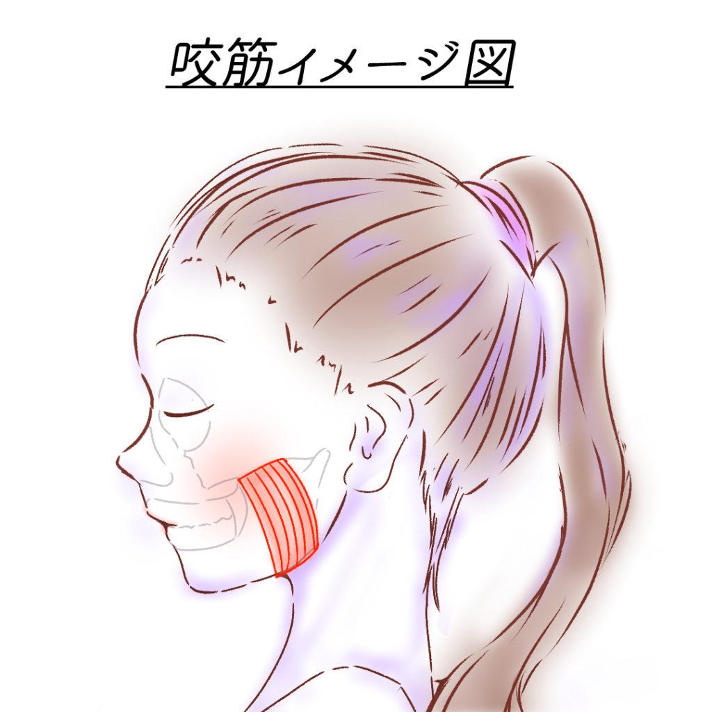 咬筋イメージ図